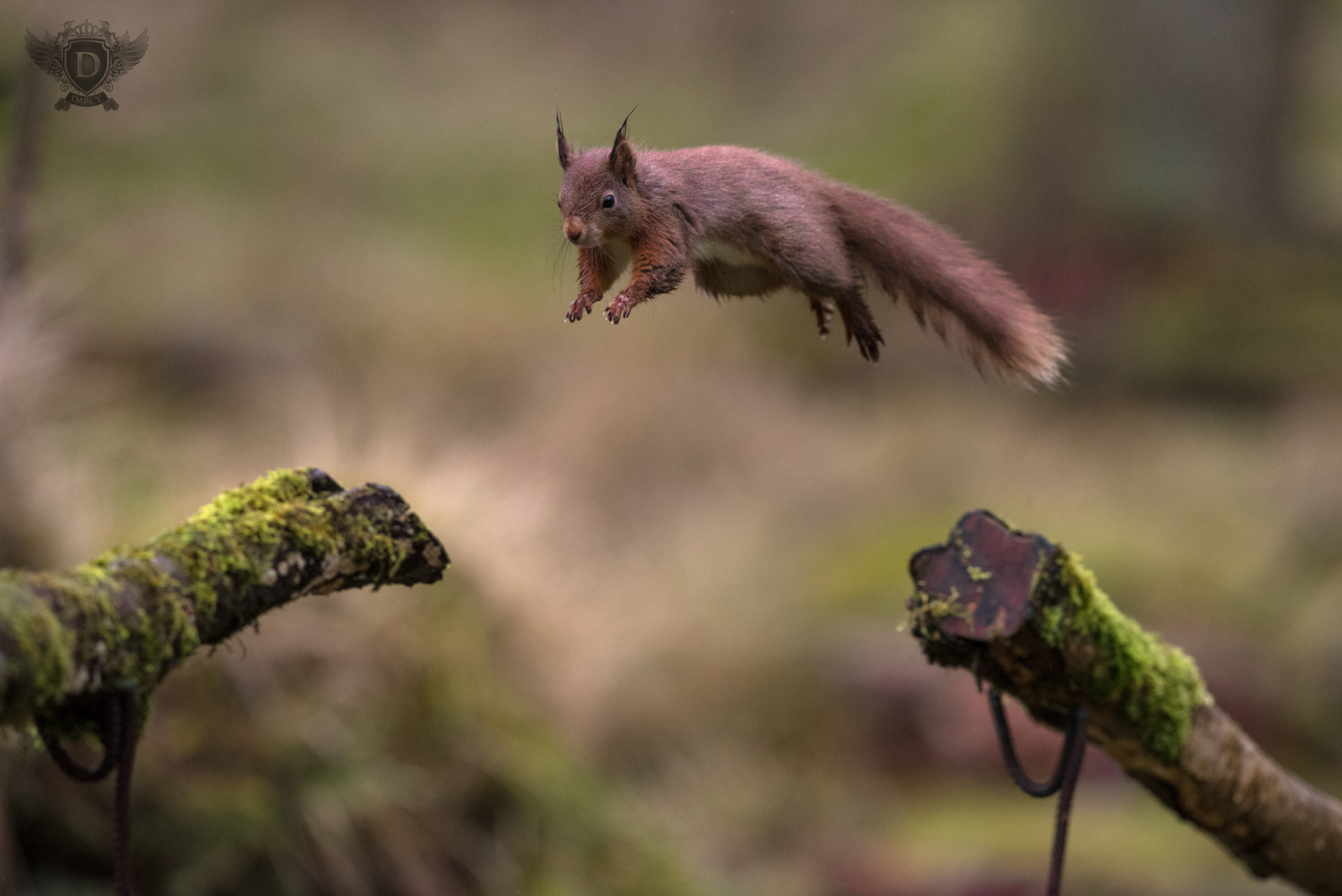Squirrel Airlines by Darcy Brown