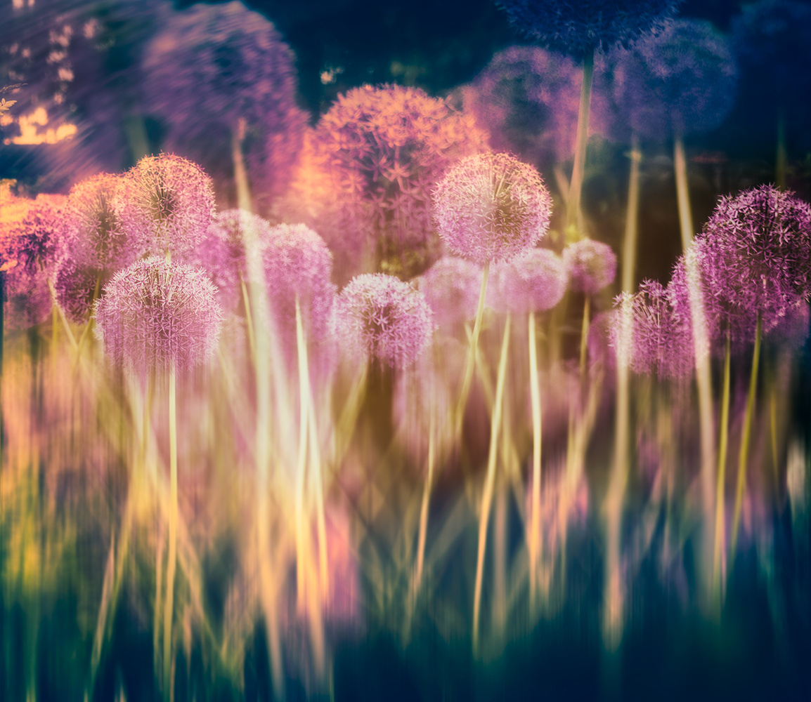 All about the Alliums by Darcy Brown