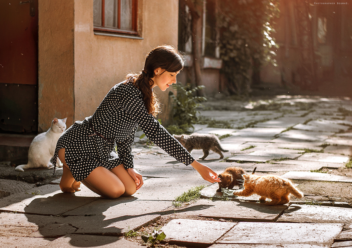 Cats by Dima Begma