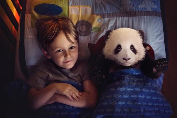 Night Panda by Amanda Campbell