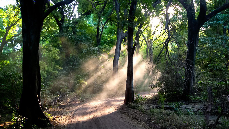 Light Rays by Saadia Mahmud