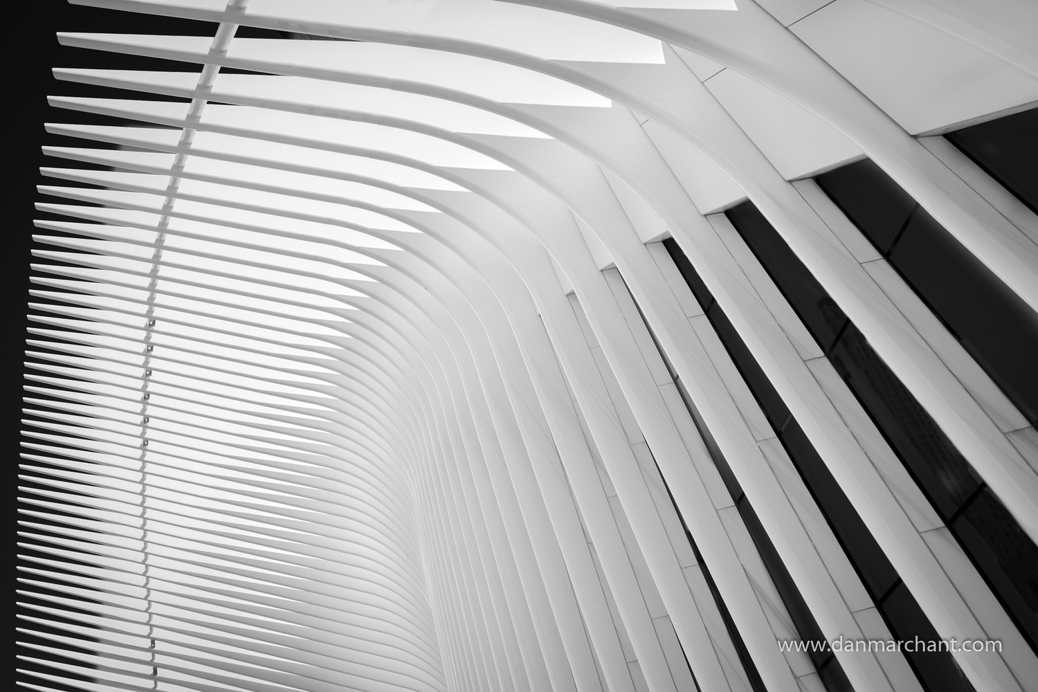 The Oculus by Dan Marchant