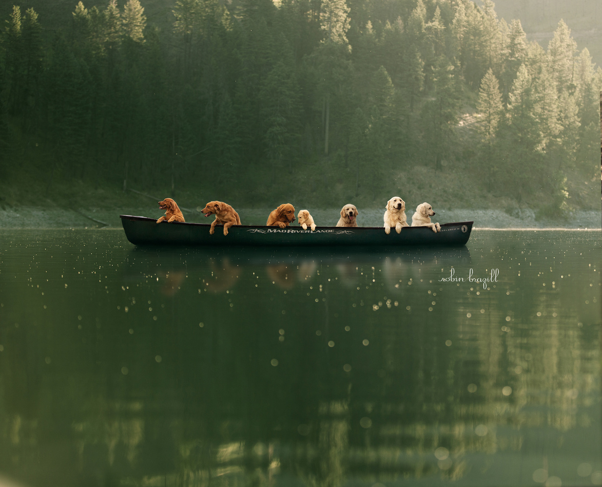 Golden Retriever Canoe by Robin Brazill
