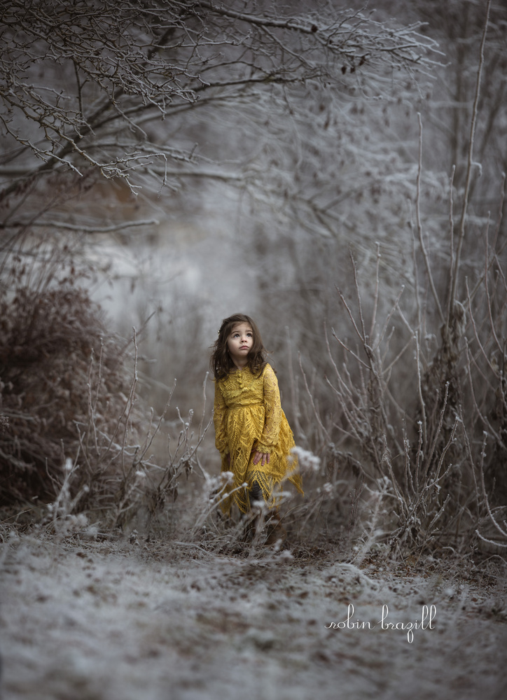 Winter Wonderland  by Robin Brazill