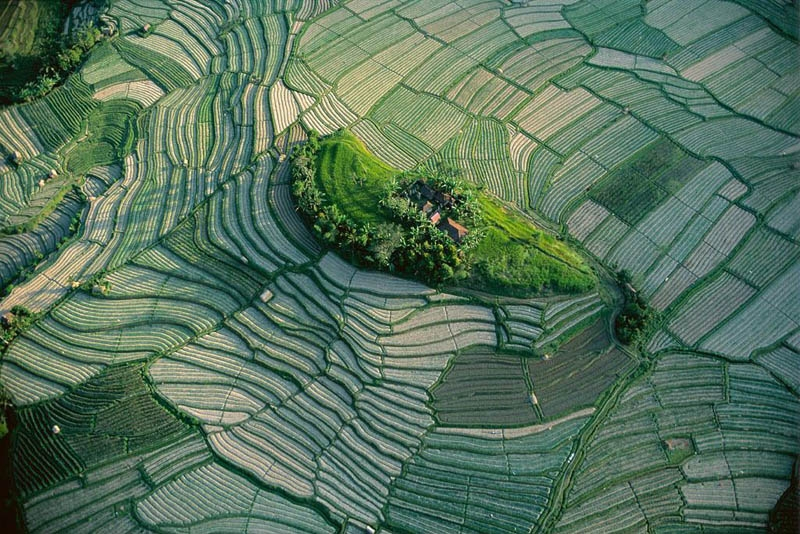 Islet in the terraced rice fields of Bali, Indonesia