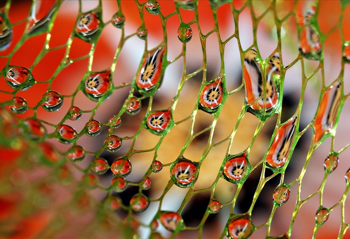 Amazing Pattern Made With Water Droplets