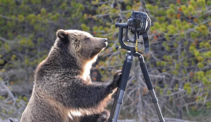 Camera Vs. Wild: The Damage Waiver Bearly Covered This One