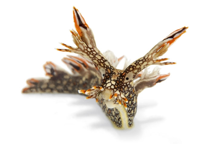 Who Thought Sea Slugs Could Look This Cool