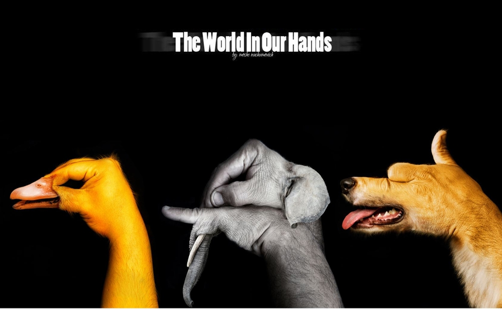 The World In Our Hands: Photo Project Illustrating The Bond Between Humans and Animals