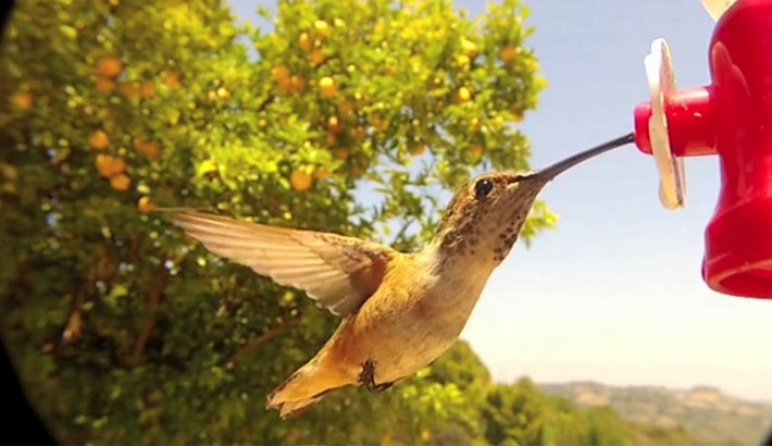 For Bird Watchers-The Newest Accessory for the Iphone and GoPro