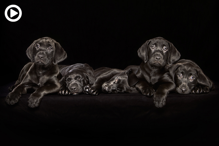 'Overlooked Black Dogs': A Photo Project That Brings Awareness to the Least Adopted Dogs