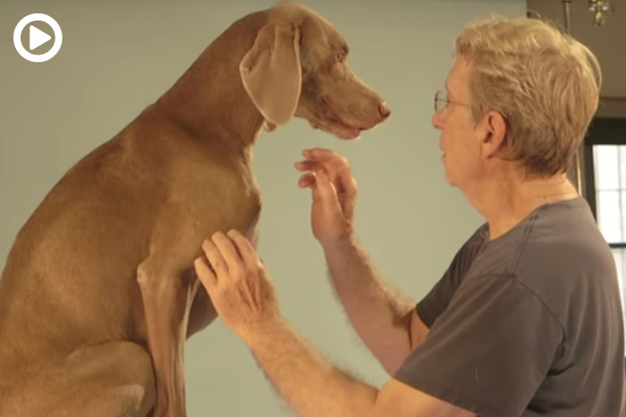 On The Bright Side - The Iconic Dog Portraits of William Wegman