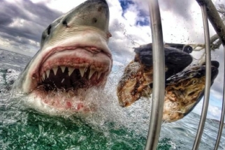 How an Elementary School Teacher Took the Most Popular Viral GoPro Photo To Date