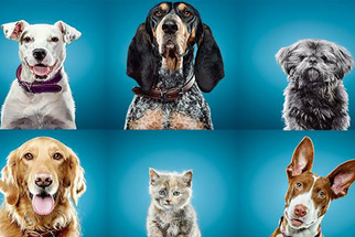 Simple Tips for Effectively Photographing Dogs in Studio