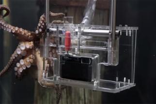 Meet The Octographer: The World's First Octopus Photographer