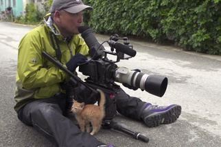 Japanese Wildlife Photographer Travels the Globe to Film Cats of the World