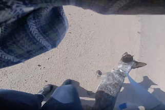 GoPro Records Woman Stealing Drone and Falsely Claiming It 'Almost Killed' Her