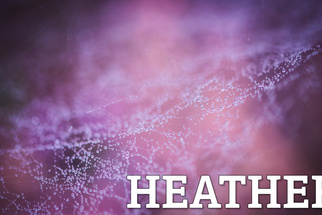 Purple Photograph Prowess: 9 Approaches to the Perfect Heather Picture