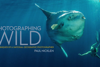 Paul Nicklen's New Book, 'Photographing Wild': Learn From a National Geographic Photographer