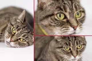Practical Beginner Tips for Studio-Style Pet Portraits