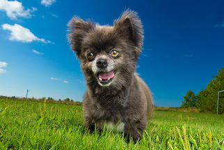 Boost Your Pet Photography Business by Working With a Rescue Group