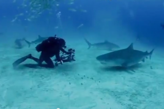 Watch A Shark Steal $15,000 Worth of Camera Equipment