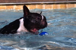 Dogs Jumping Underwater in Slow Motion (1000fps Phantom & Fastcam) with BTSV