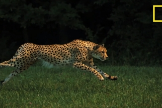 National Geographic Films Fastest Animal In Slow Mo