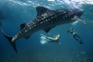 When Whale Sharks and Models Pose Together