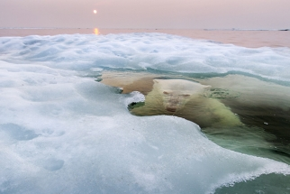 The 2013 National Geographic Photography Contest Winners