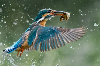 B&H Wilderness Photo Competition Winners Announced
