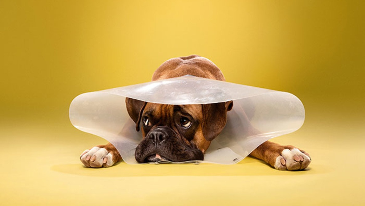 Photographer Ty Foster Tugs at Our Heart Strings in 'Timeout' a Series of Dogs in 'Cones of Shame'
