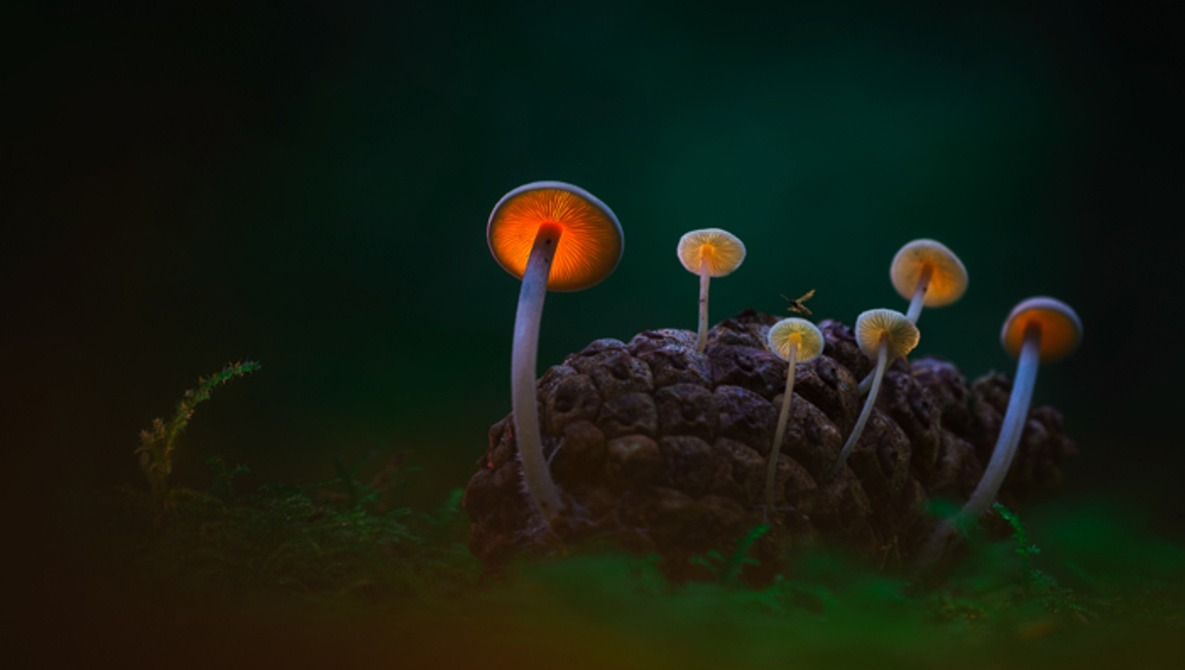 Those Glowing Mushrooms (Part 1): 6 Steps to Photographing Your Own Fantasy World