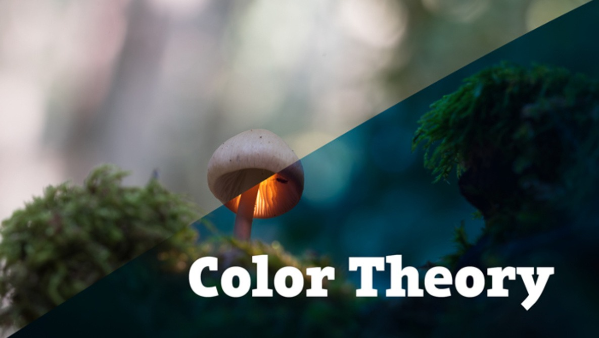The Ultimate Guide for Color Theory for Photography: Photo Editing