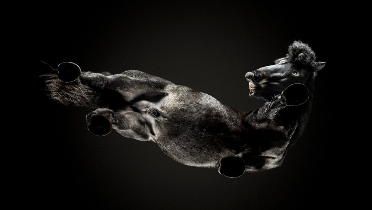 Photographing Horses From Ten Feet Underground: Fstoppers Interviews Andrius Burba