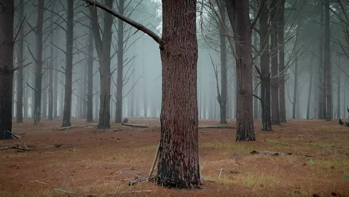 Shooting Landscape Photography in Fog