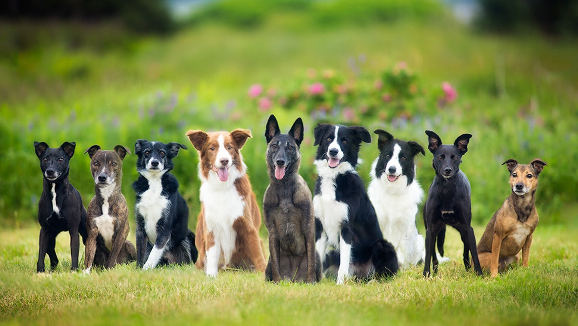 Image result for group of dogs