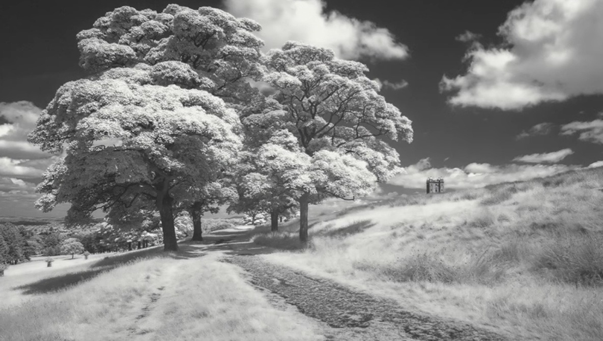 Dipping your toe in the world of infrared photography with a filter