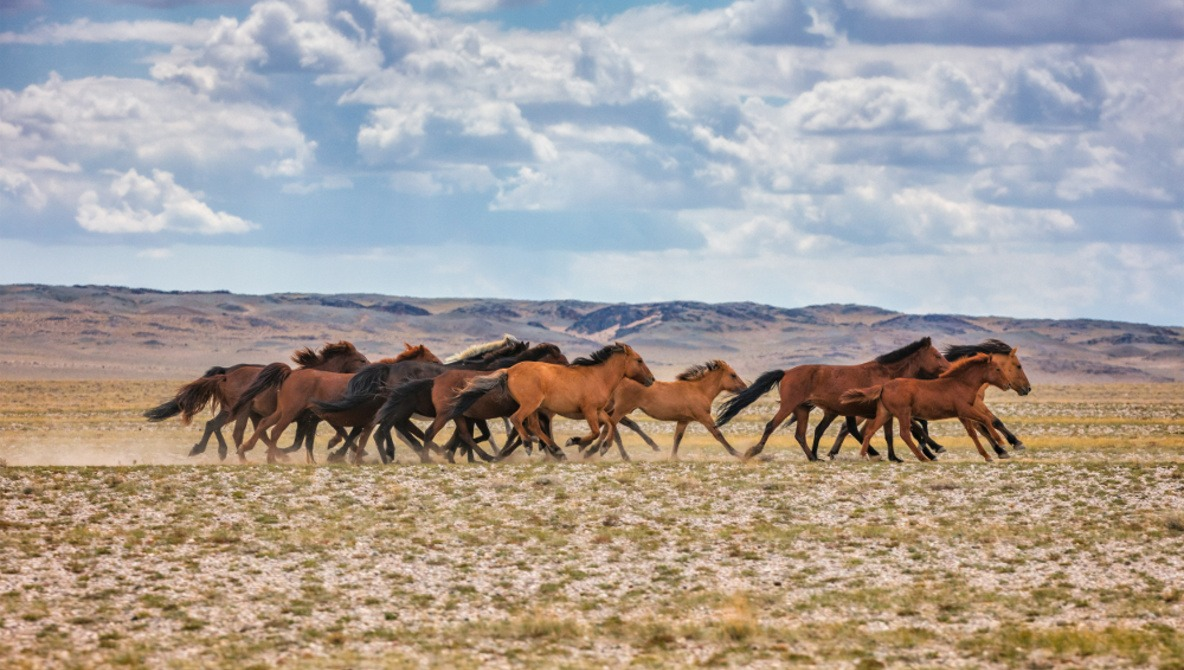 Filming a Documentary in the Mongolian Wilderness for Three Weeks