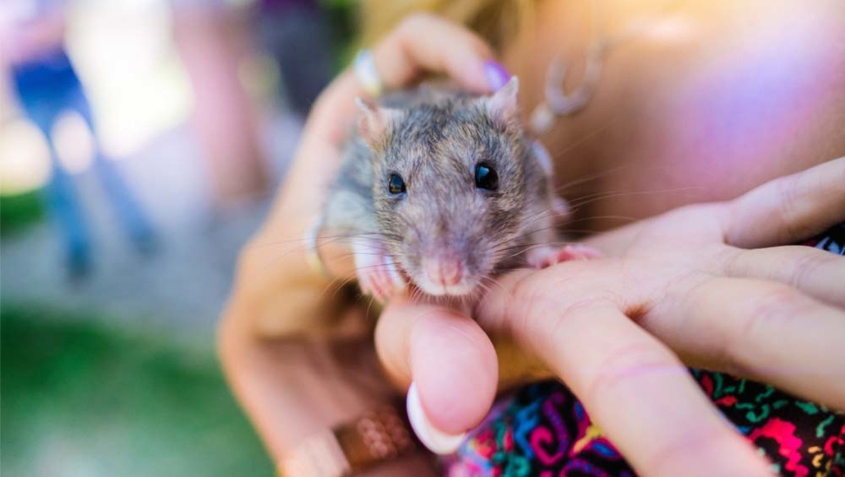 Photographer Documents the First Time Lab Rats and Mice Are Released Outdoors