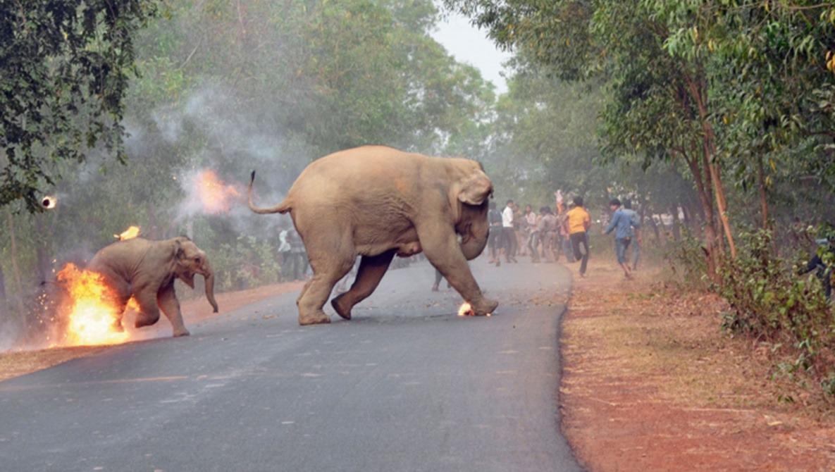 Photo of Burning Baby Elephant Wins Wildlife Photo Contest