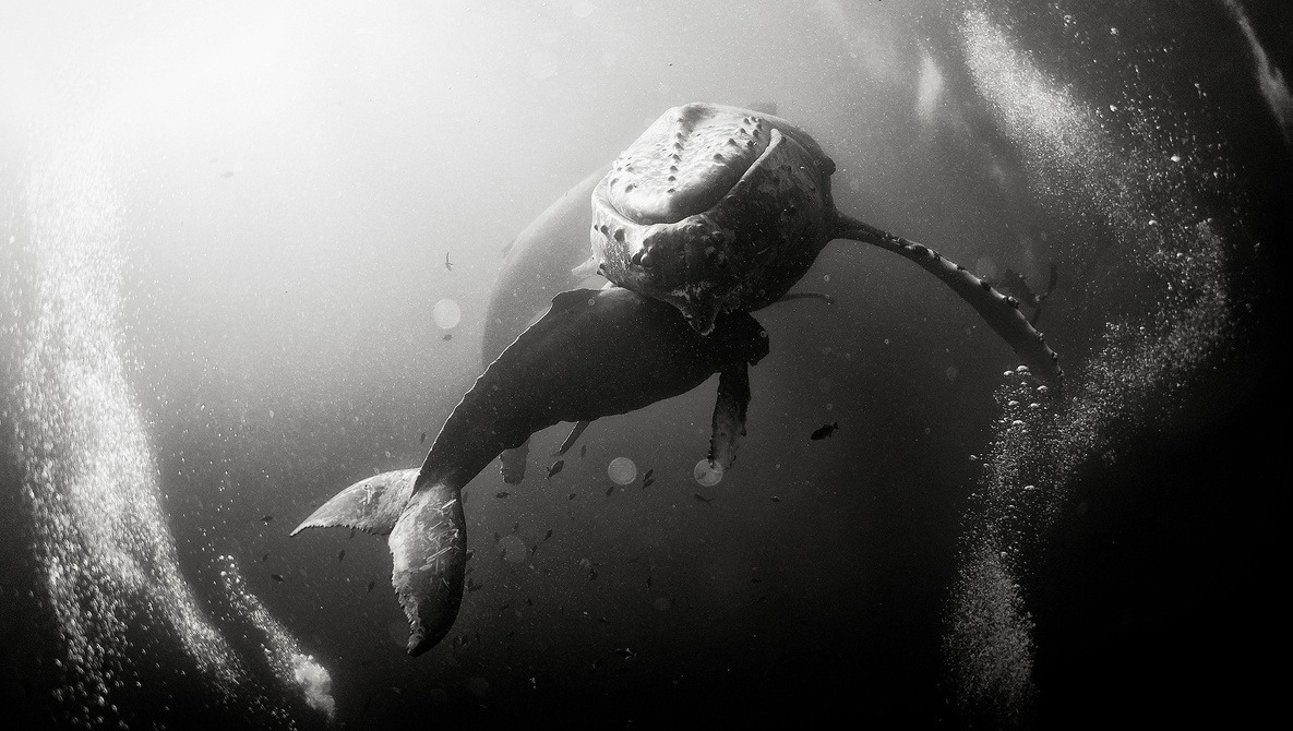 the captivating black and white underwater photography of anuar