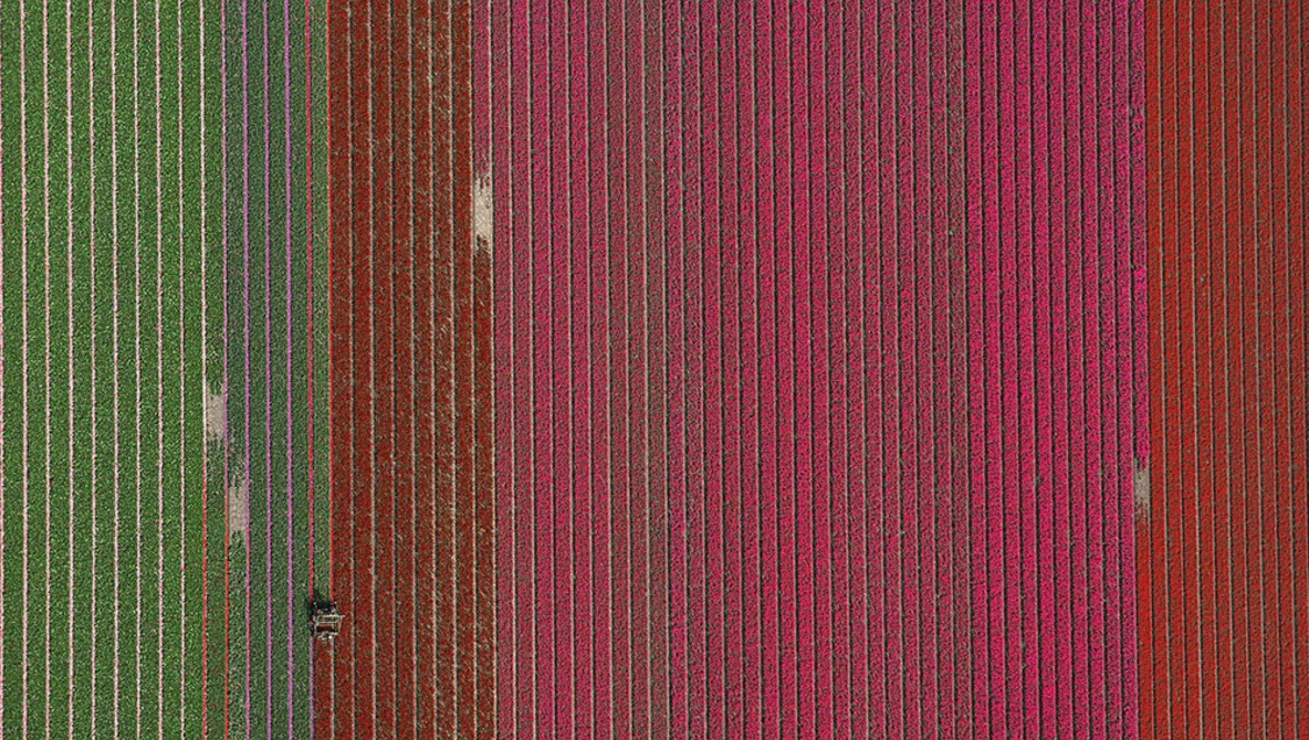 This Surreal Aerial Photo Series Features Tulip Fields in Holland
