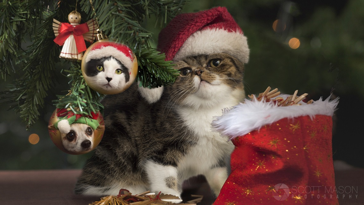Unique Holiday Gift Idea: Photograph Your Own Pet Calendar