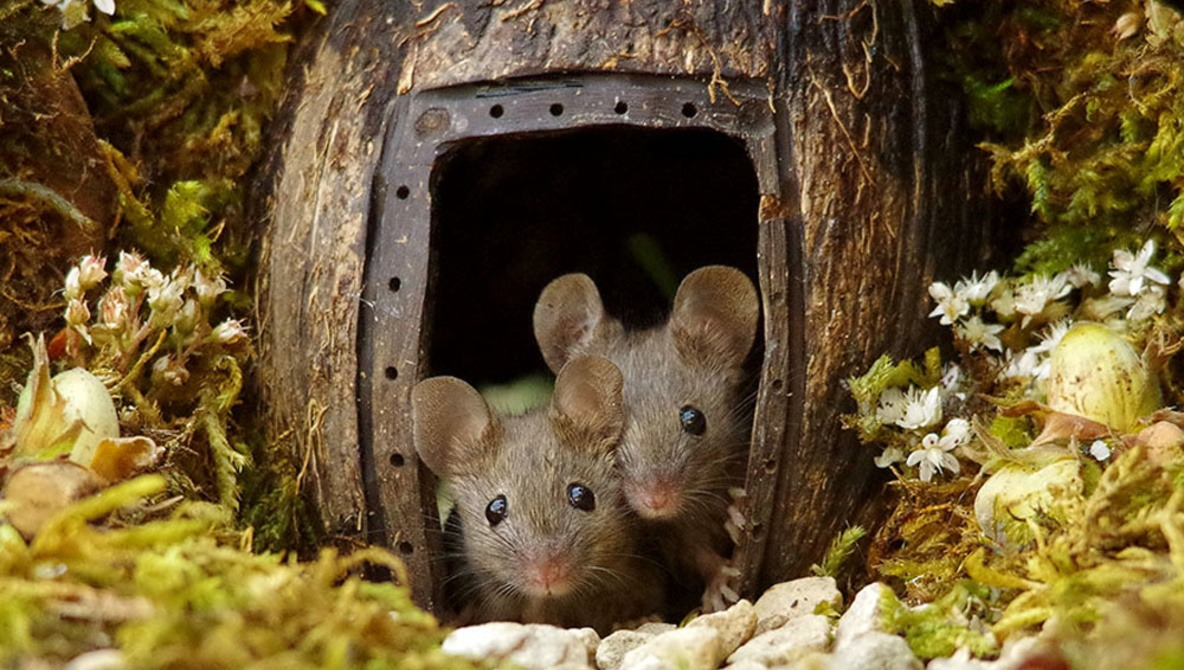 Photographer Documents Mice Living in his Garden After Constructing