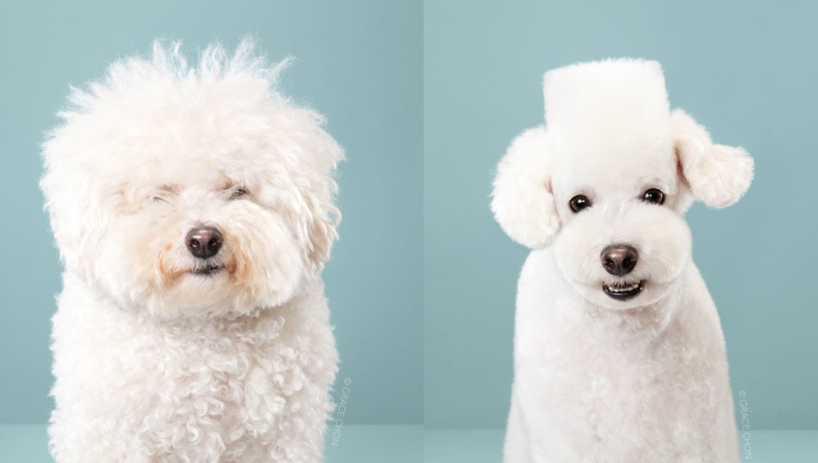 Photo Series Shows Before and After Dogs Receive Japanese Grooming Makeovers