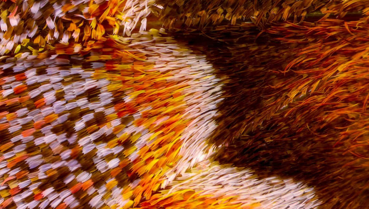 Abstract and Extreme: Close-Up Photographs of Butterfly Wings Made From Thousands of Images