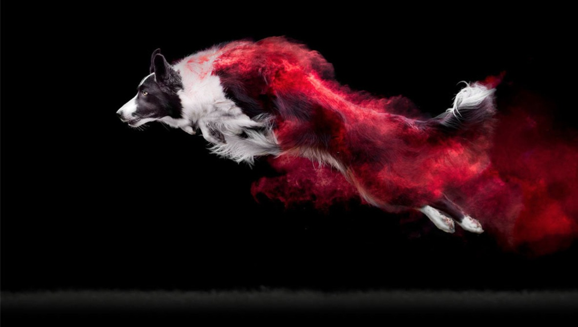 Photographer Covers Dogs in Colorful Powder For Dramatic Photo Series