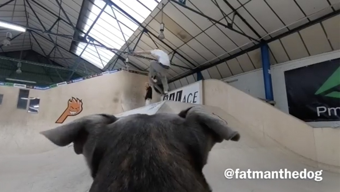 Skateboarder Uses His Dog to Film Himself