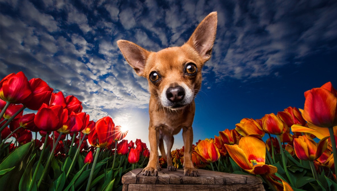Dog Photography That Is Doggone Good